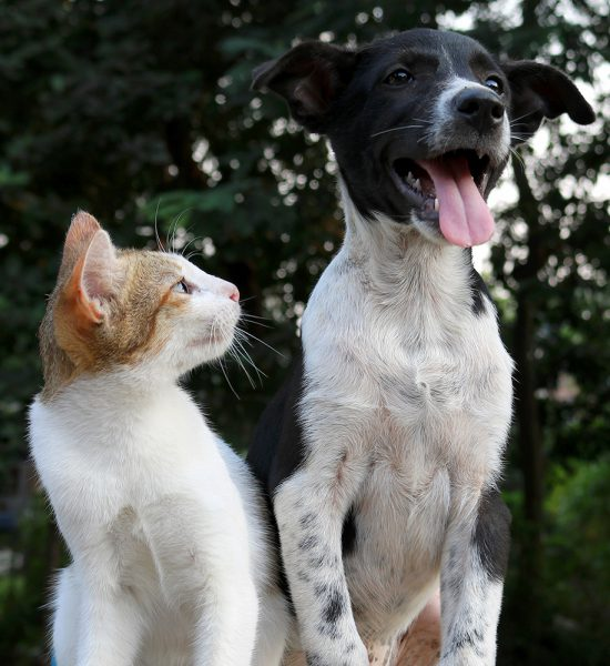 sterkliniek-dierenarts-hilversum-kat-hond-huisdier-zorgplan