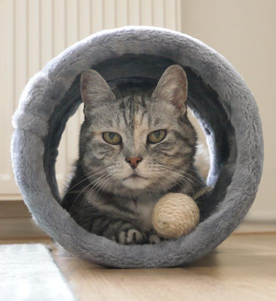 sterkliniek-dierenarts-hilversum-zorgplan-huisdier-kat